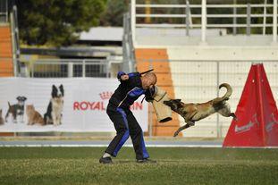 Cadha Force Canina