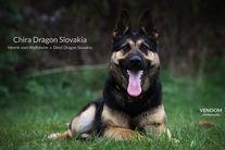 Chira Dragon Slovakia