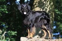 Gitte ex Canis Lupus