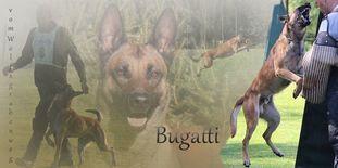 Bugatti vom Wolfsgrabenweg