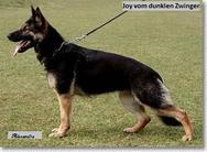 Joy vom dunklen Zwinger