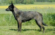 Canine For Use Inez