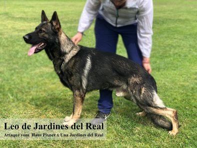 Leo de Jardines del Real