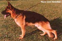 Nero vom Hirschel