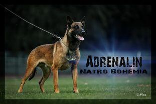 Adrenalin Natro Bohemia
