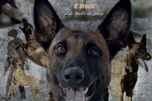 O'Bruce de la Vallée de Luvry