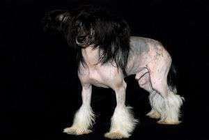 Topaz Magic Dog Of The Kanis