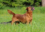 Eana Mad-vet-dogs