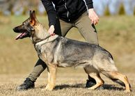 Ivana Hrozna European K9 training base