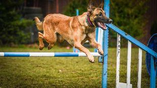 Lili Marshall Dogs