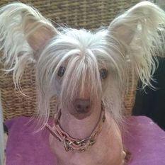Be My Dog's Pinball Cha Cha