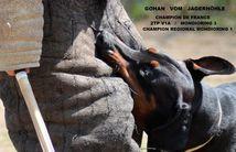 Gohan vom Jagerhohle
