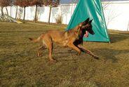 Doglandsportdog Honda