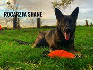 Rocarzja Shane