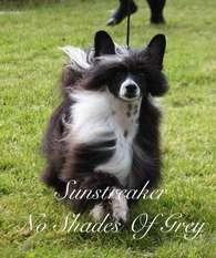 Sunstreaker No Shades Of Grey