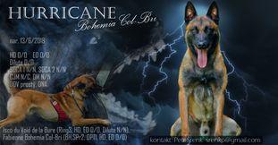 Hurricane Bohemia Col-Bri