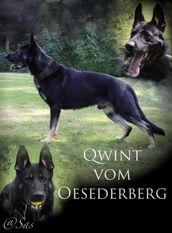Qwint vom Oesederberg