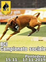 BCI Campionato sociale