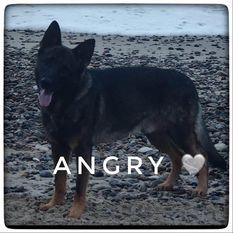 Angry von Starker Wille