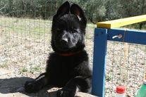 Jabina Otis, 2 mesi.
