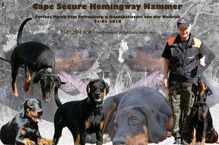 Cape Secure Hemingway Hammer