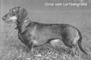 Circe vom Lortzengrund