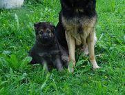 Xira und Gladiator ( Pangu )