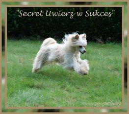 Secret Uwierz W Sukces