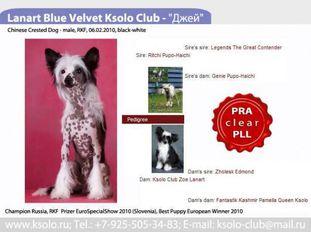 Lanart Blue Velvet Ksolo Club