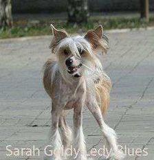 Sarah Gold Lady Blues