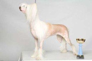 Olegro Katrin Legendary Blondy