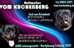 Ilka vom Kuchenberg II
