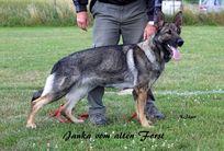 Janka vom alten Forst