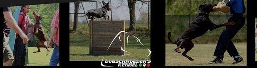 Dobschroeder's
