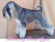 Marveldog Donna Roza