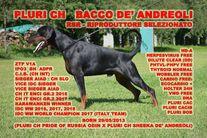 Bacco De' Andreoli