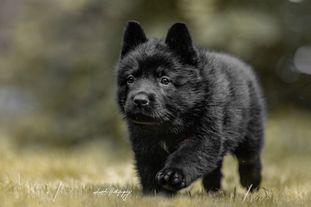 Neska vom Wolfsweiher