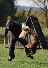 Cosmo von den Strong Boxern