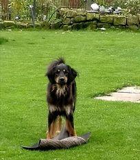 Luzzya ex Canis Lupus