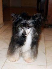 Be My Dog's Salut Mayoumba