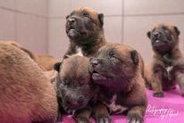 Pups Lara & Linck 2 weken oud