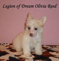 Legion Of Dream Olivia Reed
