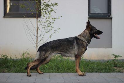 Fay vom Quellberg