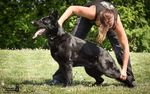 Holly Šťáhlavský diamant