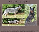 Kalle of Little Willy Willys