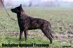 Rochallor National Treasure