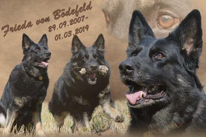 Frieda von Bödefeld