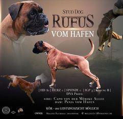 Rufus vom Hafen