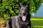 Sally Black Chabet