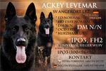 Ackey Levemar
